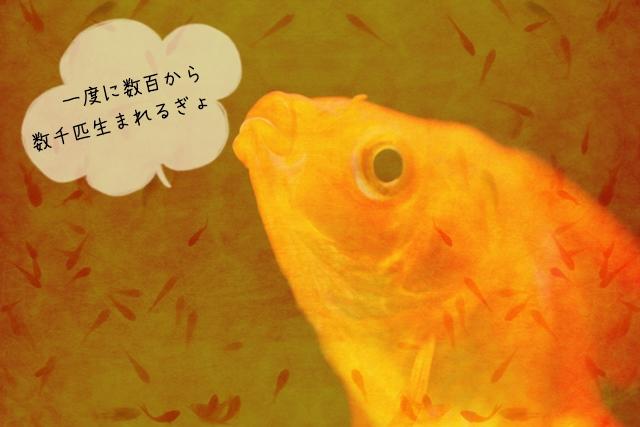 稚魚の育て方
